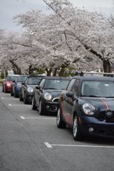 🌸🌸 Cherry Blossom Run 2019 🌸🌸